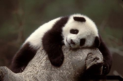 PandaGurl919's picture